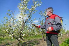 Spraying pesticide. Agricultural worker in a apple orchard spraying pesticide royalty free stock images