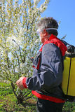 Spraying pesticide. Agricultural worker in a cherry orchard spraying pesticide Royalty Free Stock Images