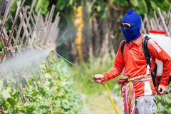 Spraying pesticide Royalty Free Stock Photos