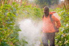 Spraying pesticide Stock Images