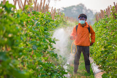 Spraying pesticide Stock Photography