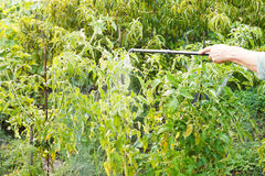 Spraying of pesticide on country garden. In summer stock photography