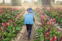 Spraying pesticide in partition Canna. Planter spraying pesticide in partition Canna at sunset stock photo