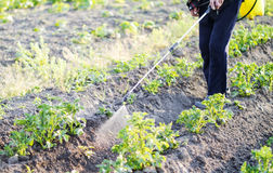 Spraying pesticide of potatoes leaves royalty free stock photos