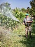 Spraying pesticide in vineyard. Senior farmer spraying pesticide in vineyard royalty free stock photography