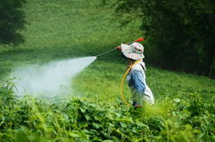 Spraying pesticides Stock Photo
