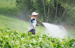Spraying pesticides royalty free stock photography