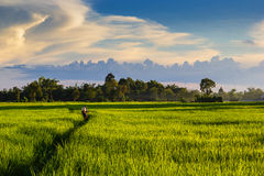 Spraying pesticides. A man were spraying pesticides on the plant with landscape shot a beautiful sky Royalty Free Stock Photos