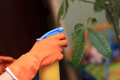 Spraying of plant Stock Photography