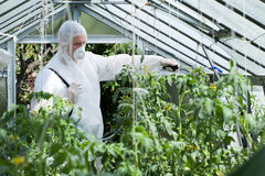 Spraying plants in greenhouse Stock Photo