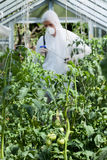 Spraying of plants in greenhouse Stock Images