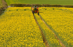 Spraying Rapeseed crop. Farmer spraying his rape seed crop also known as canola and increasingly used for bio fuel production Royalty Free Stock Images