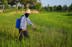 Spraying the Rice Stock Photos