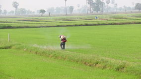 Spraying in rice field stock video