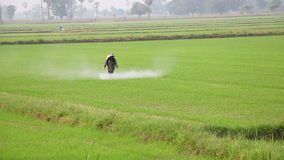 Spraying in rice field stock video footage