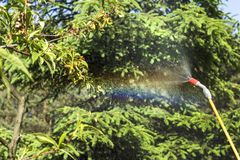 Spraying a sick peach fruit tree. Spraying a sick fruit tree. The mist emerges from the spray lance. Spraying a sick peach fruit tree stock photos