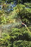 Spraying a sick peach fruit tree. Spraying a sick fruit tree. The mist emerges from the spray lance. Spraying a sick peach fruit tree stock photo