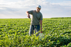 Spraying soybean field Royalty Free Stock Image