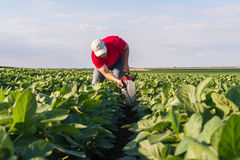 Spraying soybean field Royalty Free Stock Photography