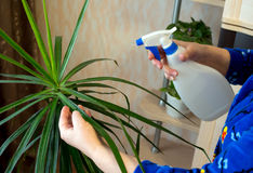 Spraying from the sprinkler of indoor plants Stock Photography