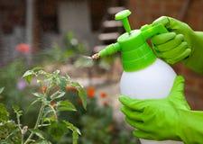 Spraying tomatos plants Royalty Free Stock Photos