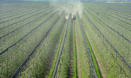 Spraying trees orchard. Spraying trees in fruit orchard against insect and deceases in spring Royalty Free Stock Image