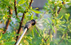Spraying trees with pesticides Royalty Free Stock Photography