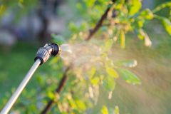 Spraying trees with pesticides Stock Photos
