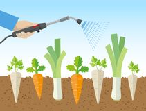 Spraying Vegetables With Dangerous, Chemical Substances Stock Photo
