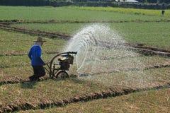 Spraying water in rice. Stock Image