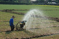 Spraying water in rice. Royalty Free Stock Photography