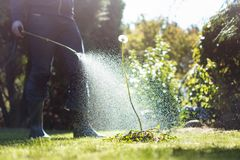 Free Spraying Weeds In The Garden Stock Photos - 128978843