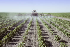 Spraying young cotton plants in a field Stock Photos