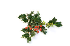 Sprays of red & green holly berries Royalty Free Stock Image