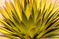 Sprazzo di sole astratto del deserto Fotografia Stock Libera da Diritti