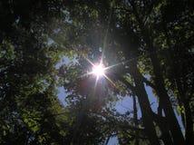 Sprazzo di sole attraverso gli alberi immagini stock