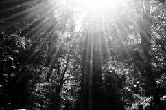 Sprazzo di sole attraverso gli alberi in legno Fotografia Stock Libera da Diritti