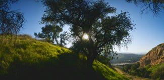Sprazzo di sole attraverso l'albero Fotografie Stock Libere da Diritti