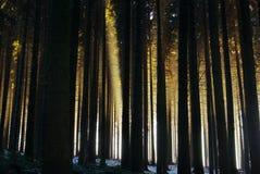 sprazzo di sole della foresta immagine stock