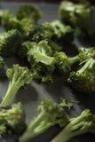 Cut broccoli on dark background. A spread of broccoli roses on dark grey background Stock Photo