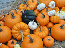 Spread of pumpkins Royalty Free Stock Photo