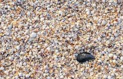 Spread small seashells on the sea beach Royalty Free Stock Photography