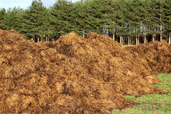 Manure stock photography