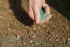 Spreading grass seed in spring by hand for the perfect lawn stock image