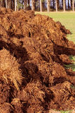 Manure for organic farming Stock Image
