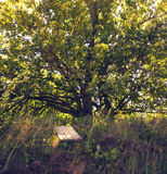 Spreading oak on the hill. Spreading green oak grows on the hill in the sunlight in late summer Royalty Free Stock Images