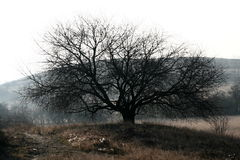Spreading tree Stock Photography