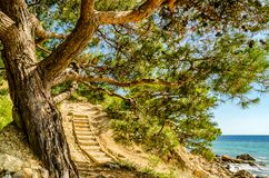 Spreading tree on the beach. And a wooden staircase. Summery. Tourism and hiking Royalty Free Stock Images