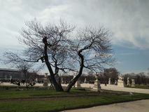 Spreading tree. Blue sky. Green lawn. Spring in Paris. royalty free stock photo