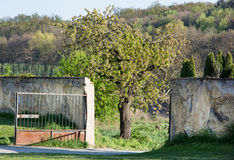 Spreading tree and metal gate Royalty Free Stock Photography